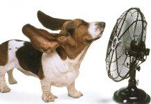 skylos heatstroke4