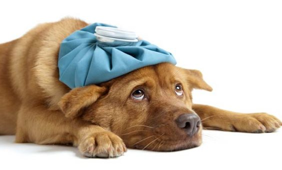 dog illness