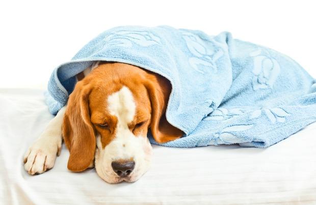 dog illness1