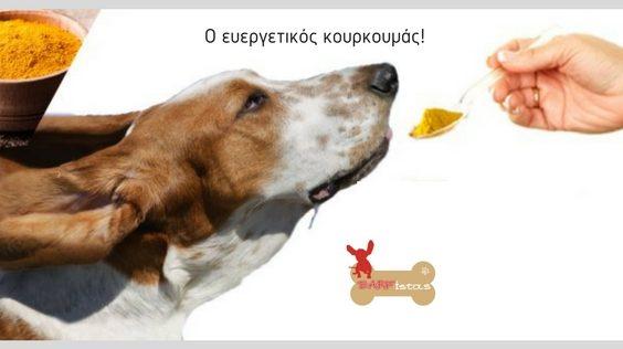 Κουρκουμάς και σκυλοτροφή