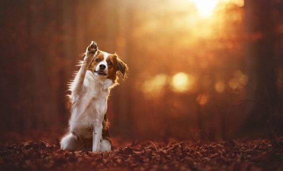 Φθινοπωρινές προληπτικές εξετάσεις σκύλων