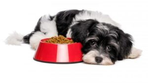 Παλινδρόμηση και ξηρά σκυλοτροφή σκύλου