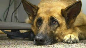 Ο σκύλος κάνει συχνά εμετό… Είναι εμετός ή παλινδρόμηση;