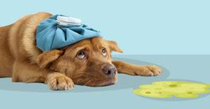 εμετός ή παλινδρόμηση σκύλου 3