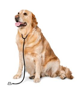 Πότε πάμε στον κτηνίατρο για το εμετό η την παλινδρόμηση2