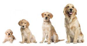Τα σκυλιά χρειάζονται διαφορετική διατροφή σε διαφορετικές ηλικίες