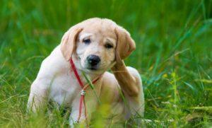 Σκυλίσια δερματίτιδα. Τα πως και τα γιατί…