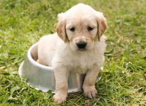 puppy barf food