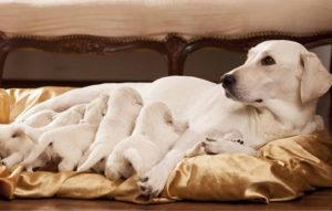 σκύλα με τα παιδιά της και διατροφή