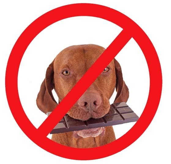 Γιατί δεν μπορούν τα σκυλιά να τρώνε σοκολάτα